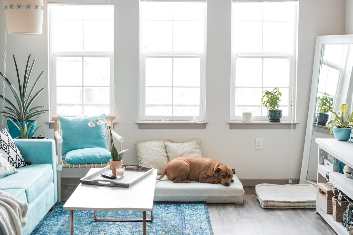 Boho Tropical Living Room with Dog Bed - Sweet Teal