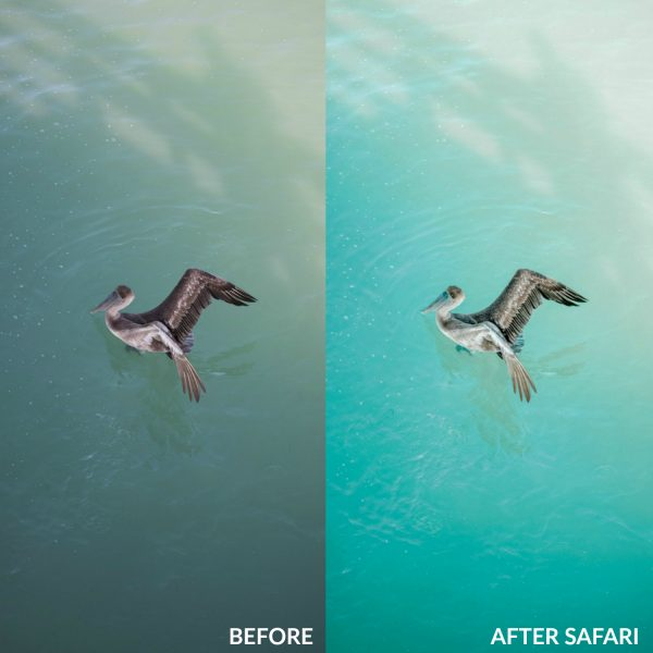Sweet Teal Golden Collection Lightroom Presets Safari 2