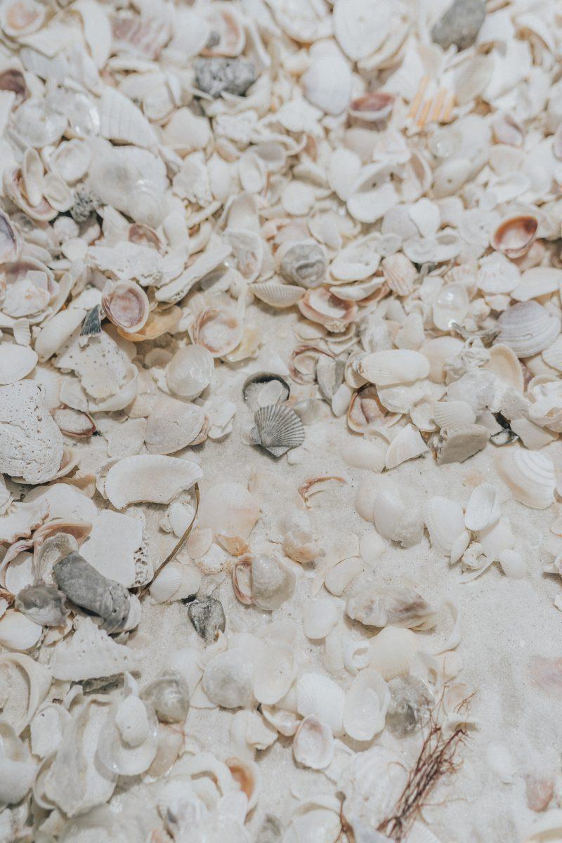 Seashells at Lovers Key State Park Beach