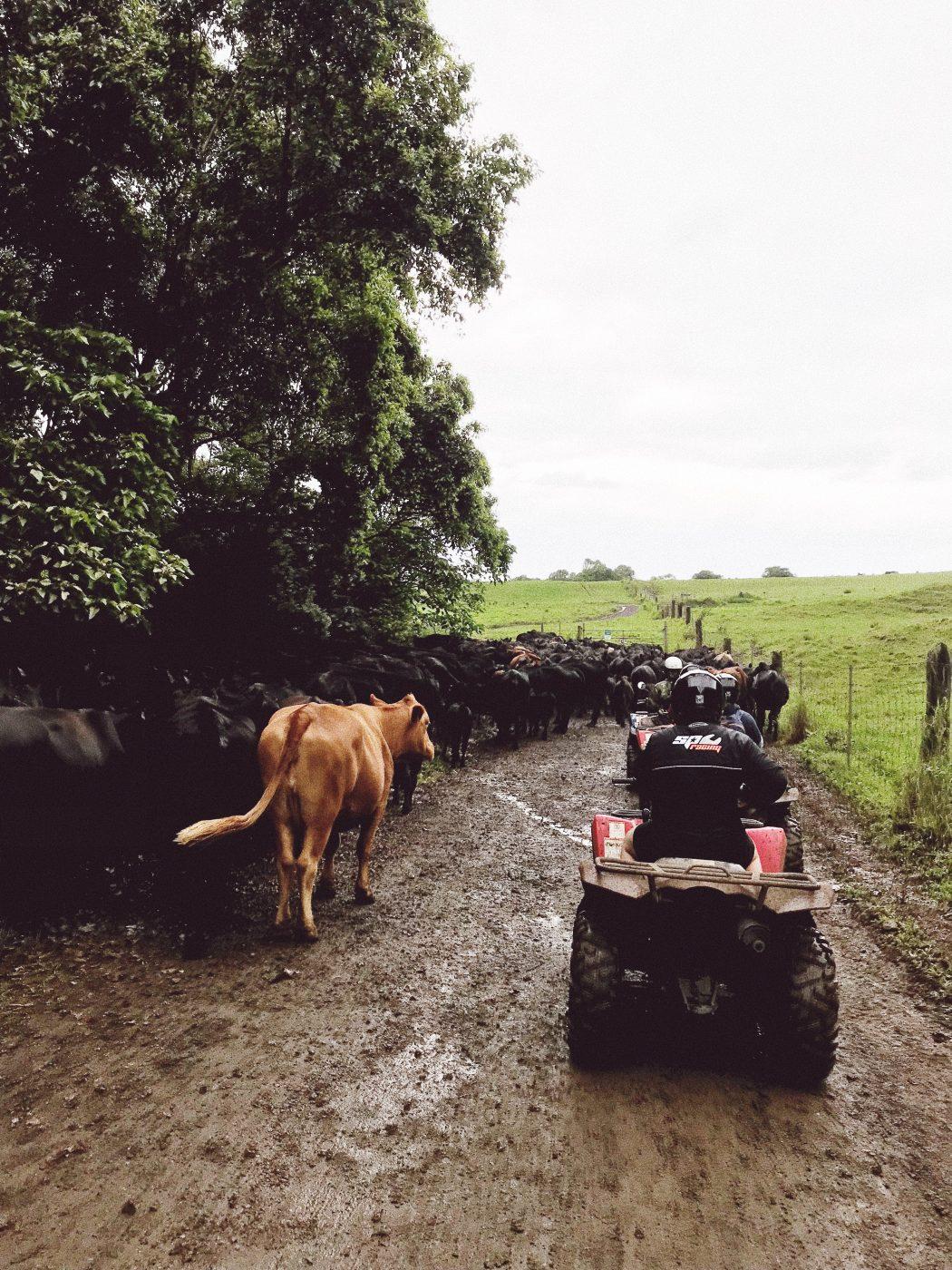 Oahu ATV