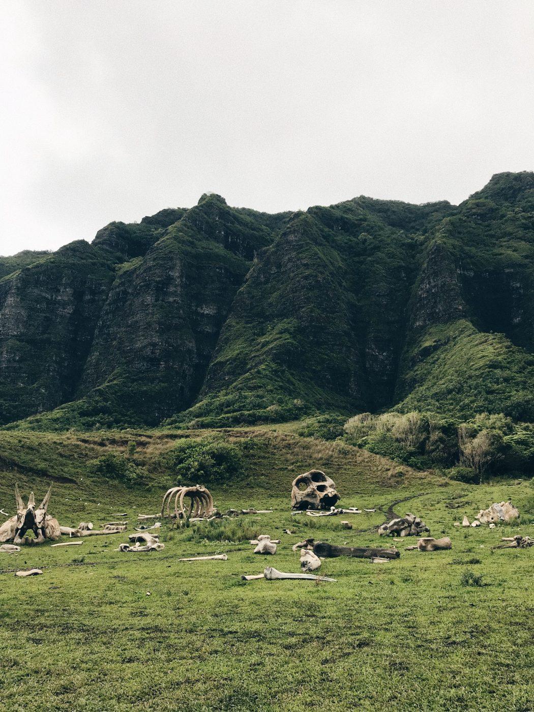 Oahu Kualoa Ranch Kong Skull Island Bones