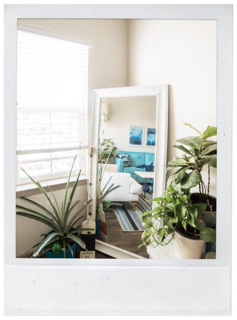 Rental upgrades - plants